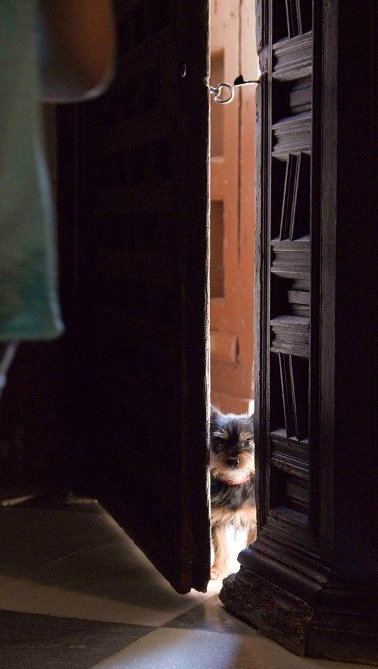 Perrillo en la iglesia de las Agustinas, Lucena